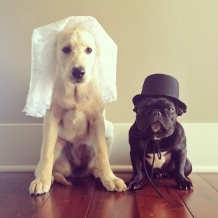 It's Trotter's wedding day