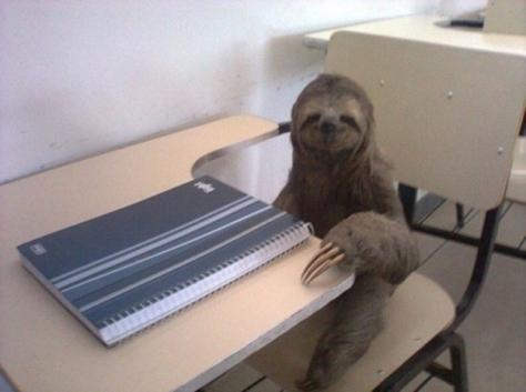 Studious sloth