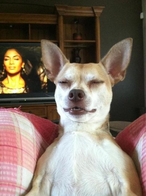 dog imitates Nicole Scherzinger