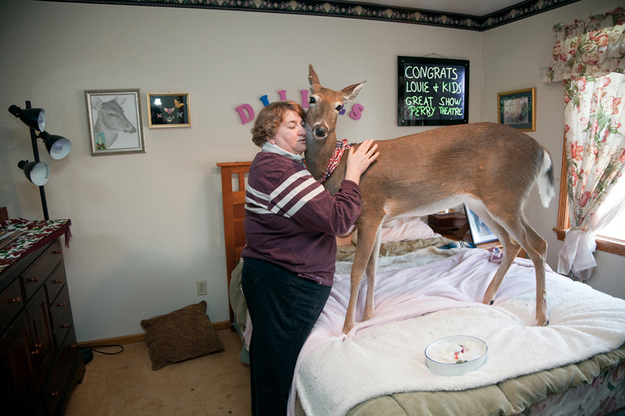 This deer must be her hubby