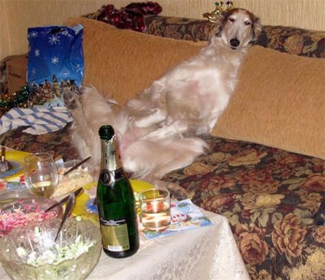 Hangover-ed dog