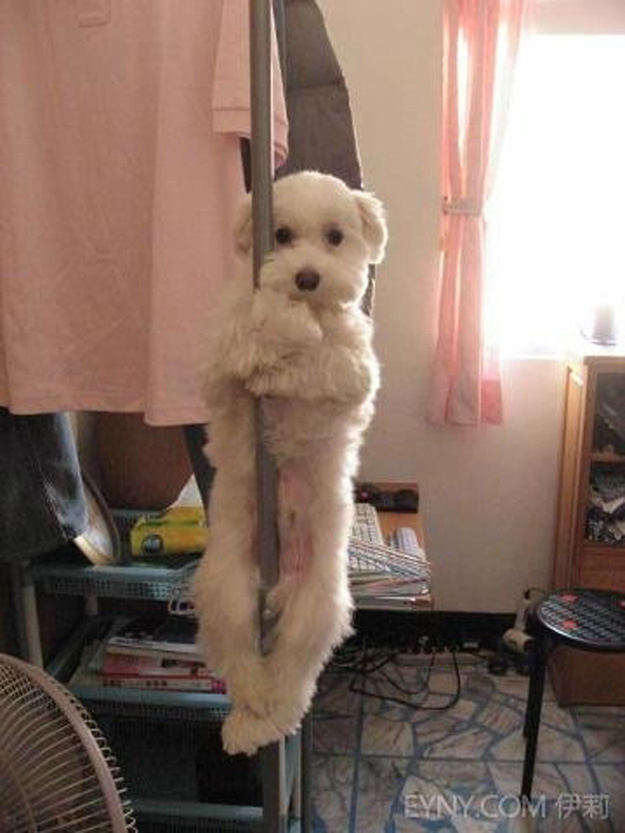 Pole-dancer