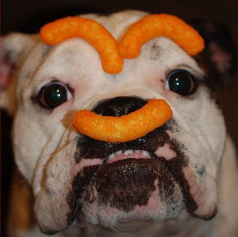 Cheese puff dog