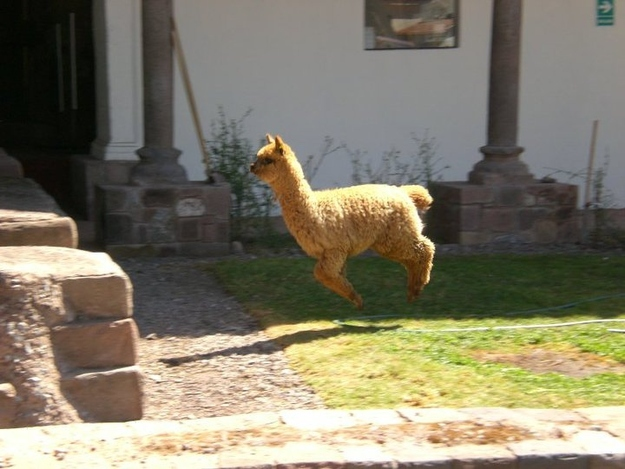 Elevating Alpaca