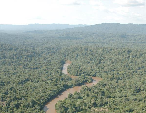 The Congo jungle is the second-largest tropical forest in the world. It contains a quarter of our planet's tropical plants