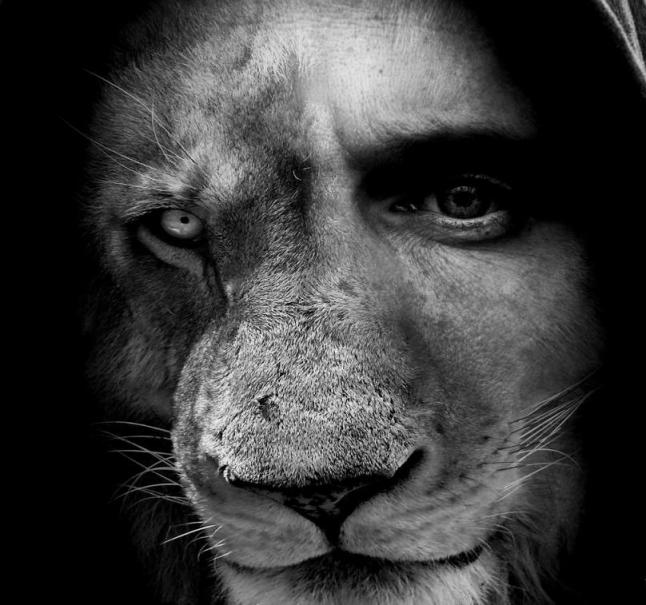 Lion-Man